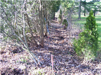 Fence Gallery Photo - Minimum Clearing Job Clearance.jpg